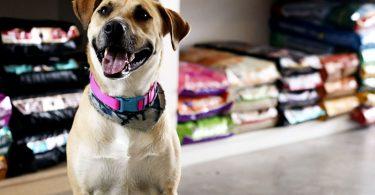 Como abrir um Pet Shop?